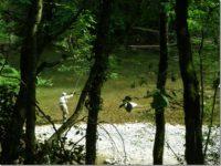 Association agréée pour la pêche et la protection du milieu aquatique de l'Albanais (AAPPMA) – École de pêche du Chéran