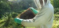 Petite récolte pour le rucher urbain