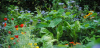 Le jardin désormais sans pesticides