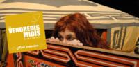 Sylvie Santi – Coulisses de la création d'un spectacle