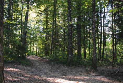 La forêt communale de Rumilly