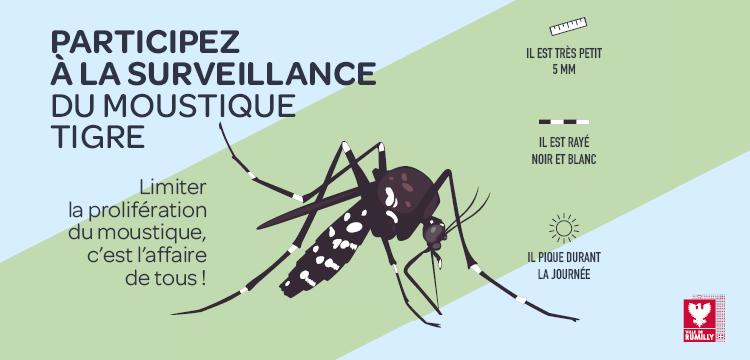Le moustique tigre : limiter sa prolifération est l'affaire de tous
