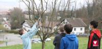 Les élèves du Clergeon taillent le verger communal